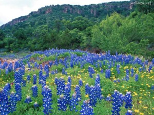 Bluebonnet-Hills,-Texas